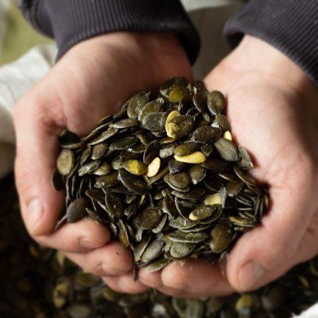 семена штирийской тыквы